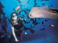 mauritius-paradis-diving